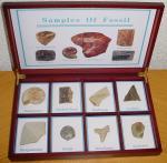 fossiilid.jpg