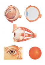 V2011_L_the-eye-i-anatomy.jpg